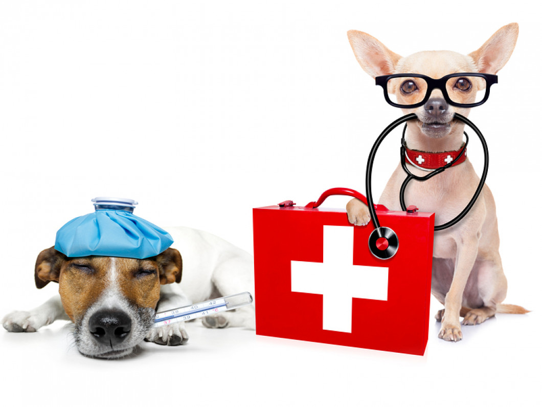 What happens if my dog gets sick during their stay?